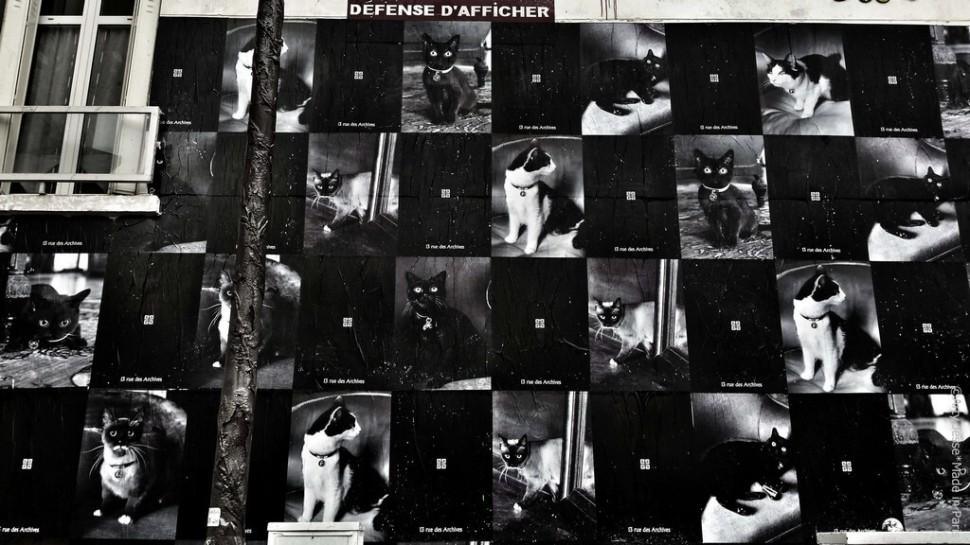 artiste peintre paris, photographie, paris pictures, beautiful bizarre, défense d'afficher, black cats